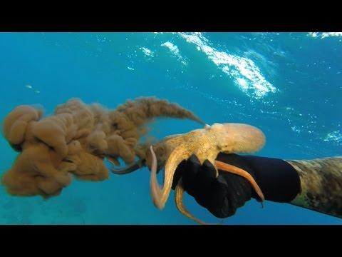 Le emorroidi come trattare un coronopo del mare