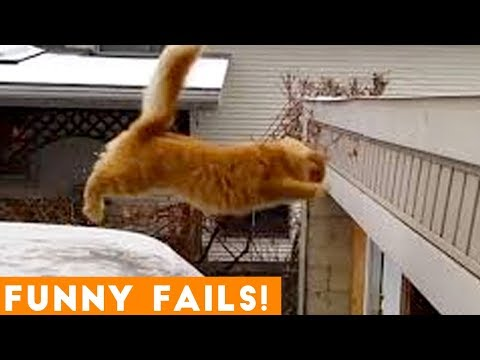 Check Out This Very Funny Animal Compilation!