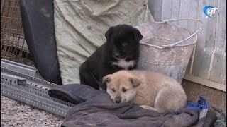 Под вопросом судьба милых щенков, которые замерзают в эти дни на Рюриковом Городище