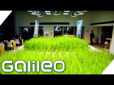 Verrücktes Japan: Ein Garten mitten in einer Firma | Galileo Lunch Break