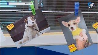 Валдайские волонтеры ищут хозяев для бездомных собак с помощью «Фотосушки»