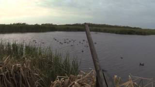 MEATHOLE: GoPro HD Hero 3 Duck Hunting 2014