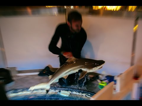 ryklio peleko opcionų prekyba
