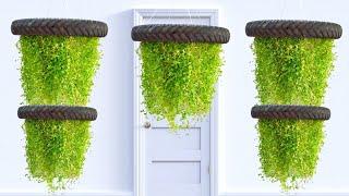 Amazing Hanging Plant Ideas/ Evergreen Turtle Vine Plant/hanging Garden/gardening Ideas For Home
