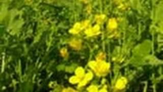 A Mustard Farm in Delhi