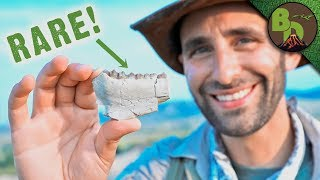 Fossil Hunting in the BADLANDS! - Video Youtube