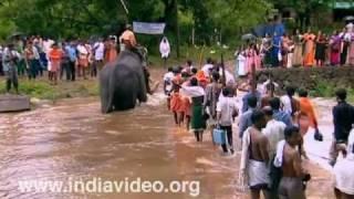Elephant crossing Bavali river, Kottiyur