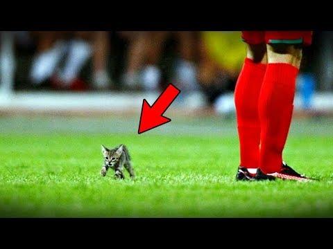 축구경기를 마비시킨 무자비한 동물들