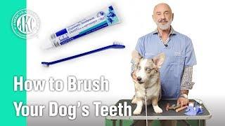 How to Brush your dog's teeth - AKC Vet's Corner