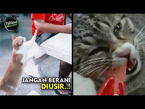 Ketika Kucing Lebih Memilih Mendekatimu saat Makan, Perhatikan 3 Pesan Allah Ini