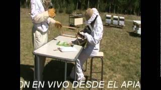 preview picture of video '4º CONCURSO DE ABEJAS REINAS - 1ª PARTE - LA FINAL'