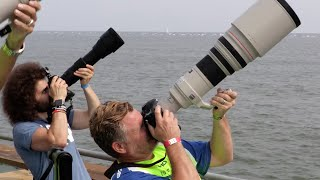 "Sigma 150-600 Contemporary ""Real World Review"": The BEST Wildlife / Sports lens for under $1,000?"