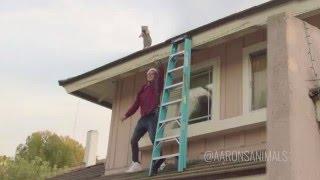 Christmas Lights - Aaron's Animals - Video Youtube