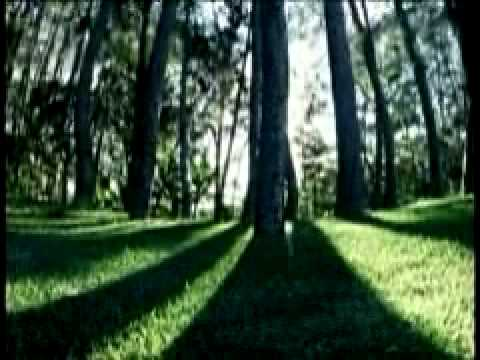 Antonio Bello - Mirabosques