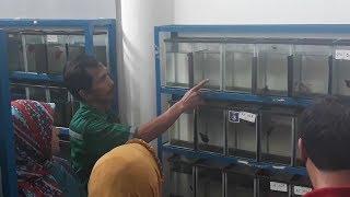Sentra Promosi Ikan Hias Slipi Tawarkan Beragam Jenis Cupang Berharga Puluhan Hingga Ratusan Ribu