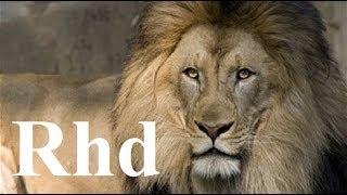 lions hunting pride, Hyenas, Cheetah, Predators,   Nature 2018 HD Documentary.