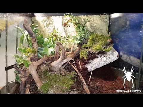 Wald Terra (ExoTerra 30x30x30) für Xenesthis immanis