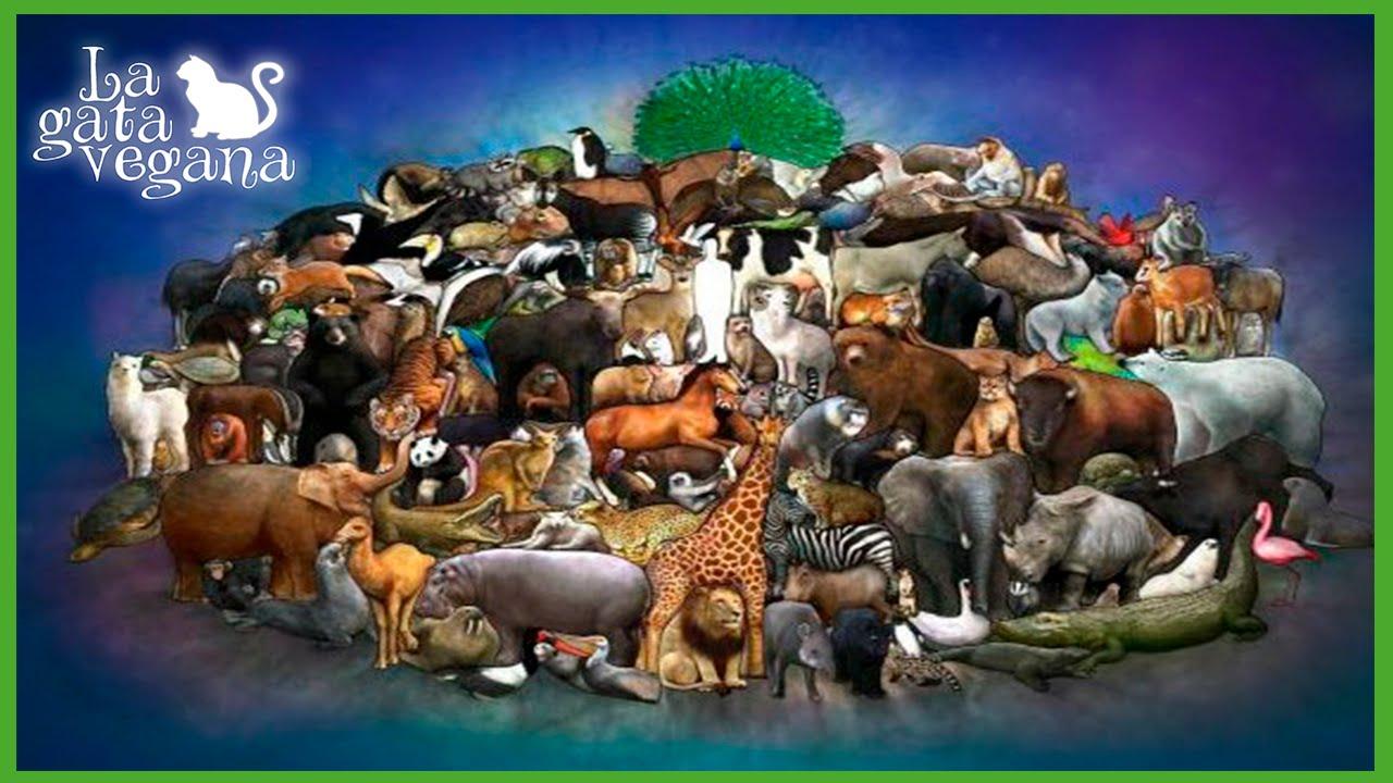 DÍA MUNDIAL DE LOS ANIMALES ¿ QUE ES UN AMANTE DE LOS ANIMALES? / REFLEXIÓN
