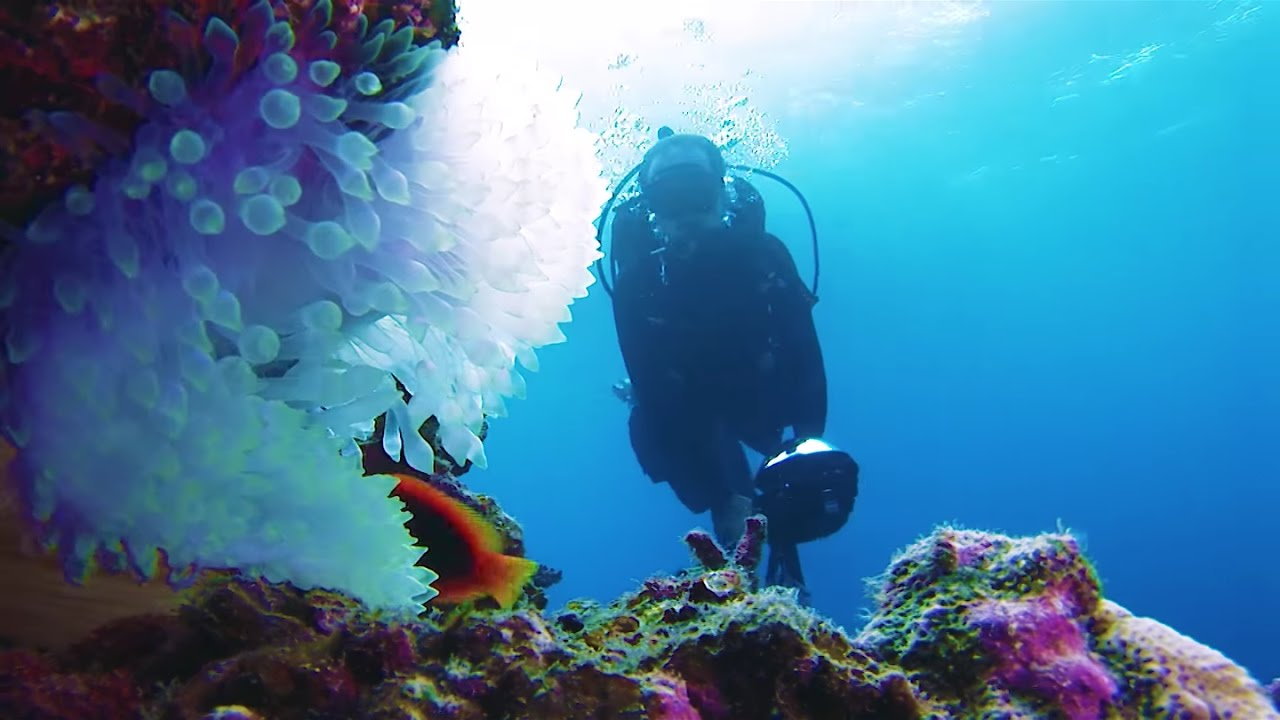 Explore the ocean in Okinawa with underwater Street View
