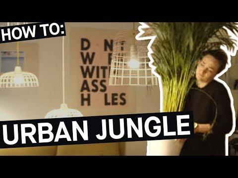 How to: Mit Zimmerpflanzen zum Urban Jungle    PULS Reportage