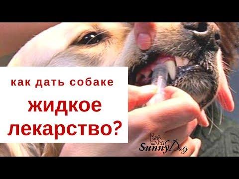 Как правильно собаке дать жидкое лекарство?