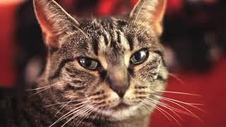 Приколы с котами #5