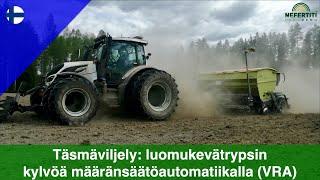 Täsmäviljely: luomukevätrypsin kylvöä määränsäätöautomatiikalla (VRA)