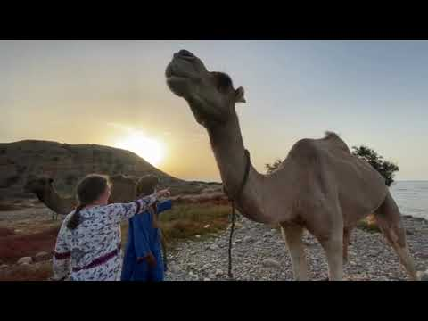 Randonnée chamelière à travers le Maroc