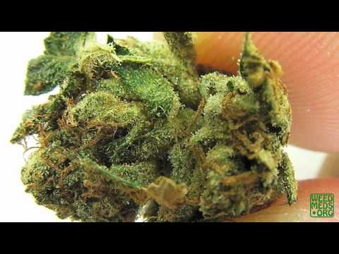 SDOWA Larry OG Strain (Medical Marijuana)