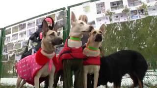 Благототворительный фестиваль в помощь собакам из сгоревшего приюта Верный