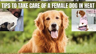 Male Vs Female Dogs | Dog in Heat - Tips for Caring for a Female. BholaShola