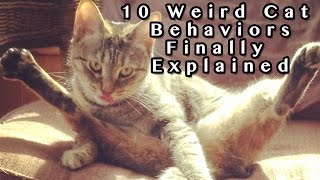 10 Weird Cat Behaviors Explained