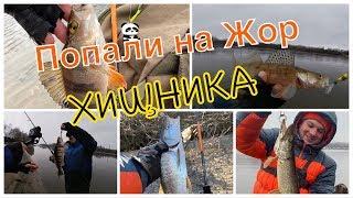 Рыбалка на канале им москвы в мае 2020