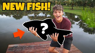 My *NEW* 25lb PREDATORY FISH for BACKYARD POND!!