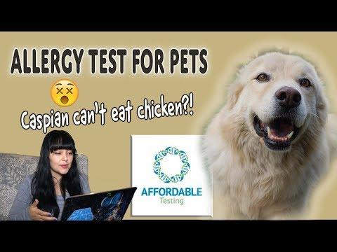 Pet Intolerance Test - Affordable Pet Test Video