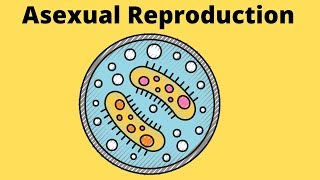 Asexual Reproduction-Fission-Budding-Fragmentation-Spores