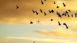 Bird Hunting - Goose, Pheasant and Quail - by ShotKam