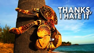 Coconut Crab: Your Worst Nightmare