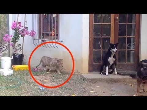 Dog Minding His Own Business Is About To Get The Surprise Of His Life