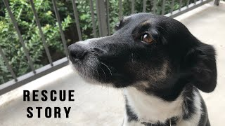 MY RESCUE DOG'S STORY + Heart Worm Treatment