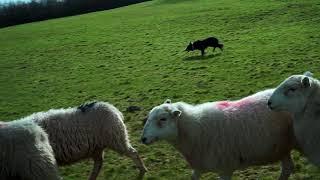 Sheep Husbandry - Featuring Moss