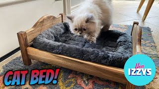We Make Our Kitten THE BEST CAT BED EVER MADE