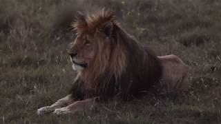 Moto Safari Film