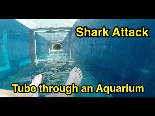 Shark Attack : Tube through an Aquarium : Atlantis The Palm in Dubai