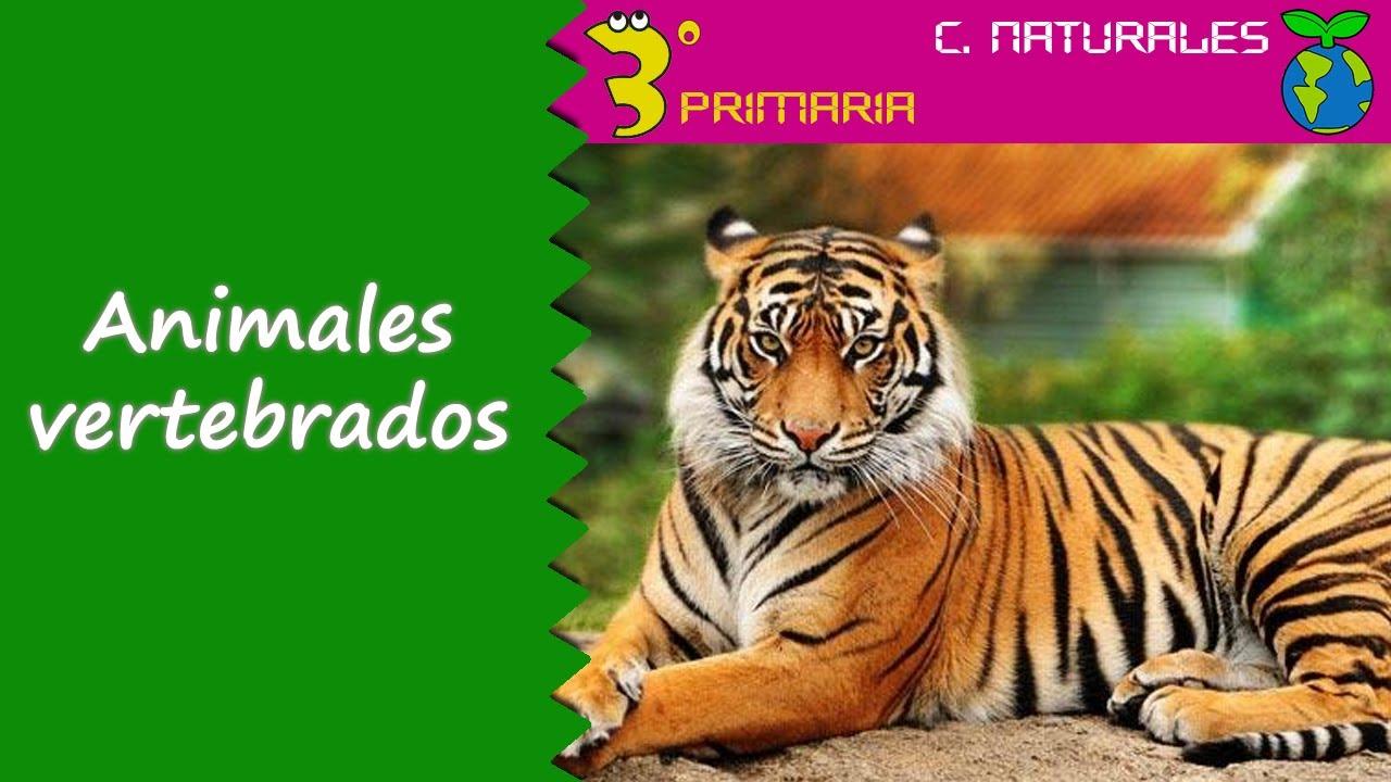 Ciencias de la Naturaleza. 3º Primaria. Tema 5. Animales vertebrados