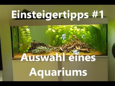 Aquarium Auswahl   Einsteigertipps #1