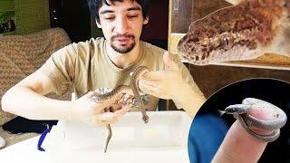ВЫБОР ПЕРВОЙ ЗМЕИ. Почему маленькие змеи не подходят в качестве первого питомца?