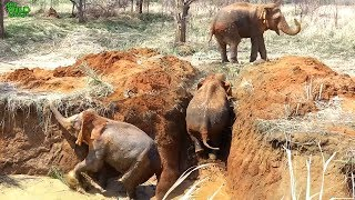 A lazy elephant trapped in a farm well saved by Humans.Ignores all help before