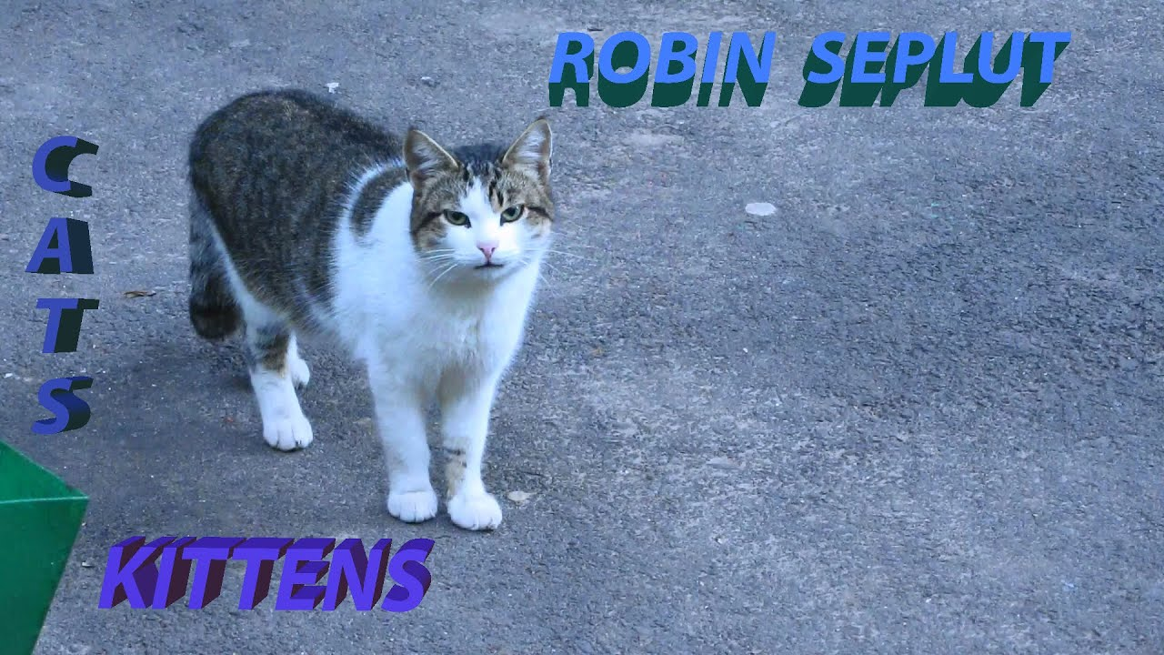 Robin Seplut channel CATS and KITTENS