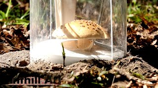 Casting a Mushroom with Molten Aluminum (Cast #091) - Video Youtube